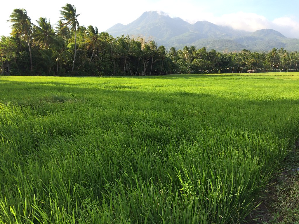 Camiguin rice paddies - Copyright Travelosio