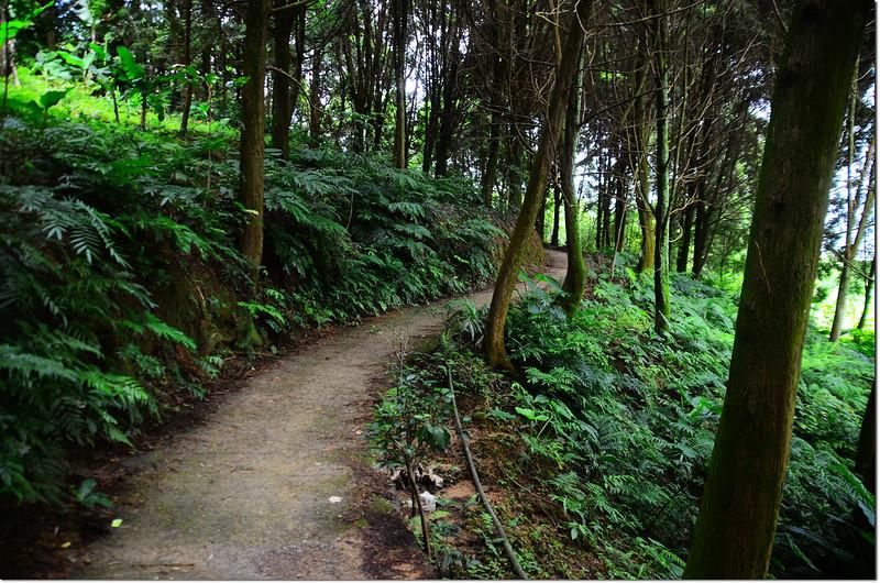南坪山登山步道 1
