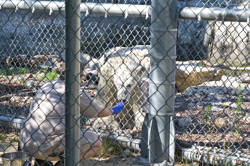 Feeding polar bear cub, Assiniboine Zoo, Winnipeg, Manitoba | packmeto.com