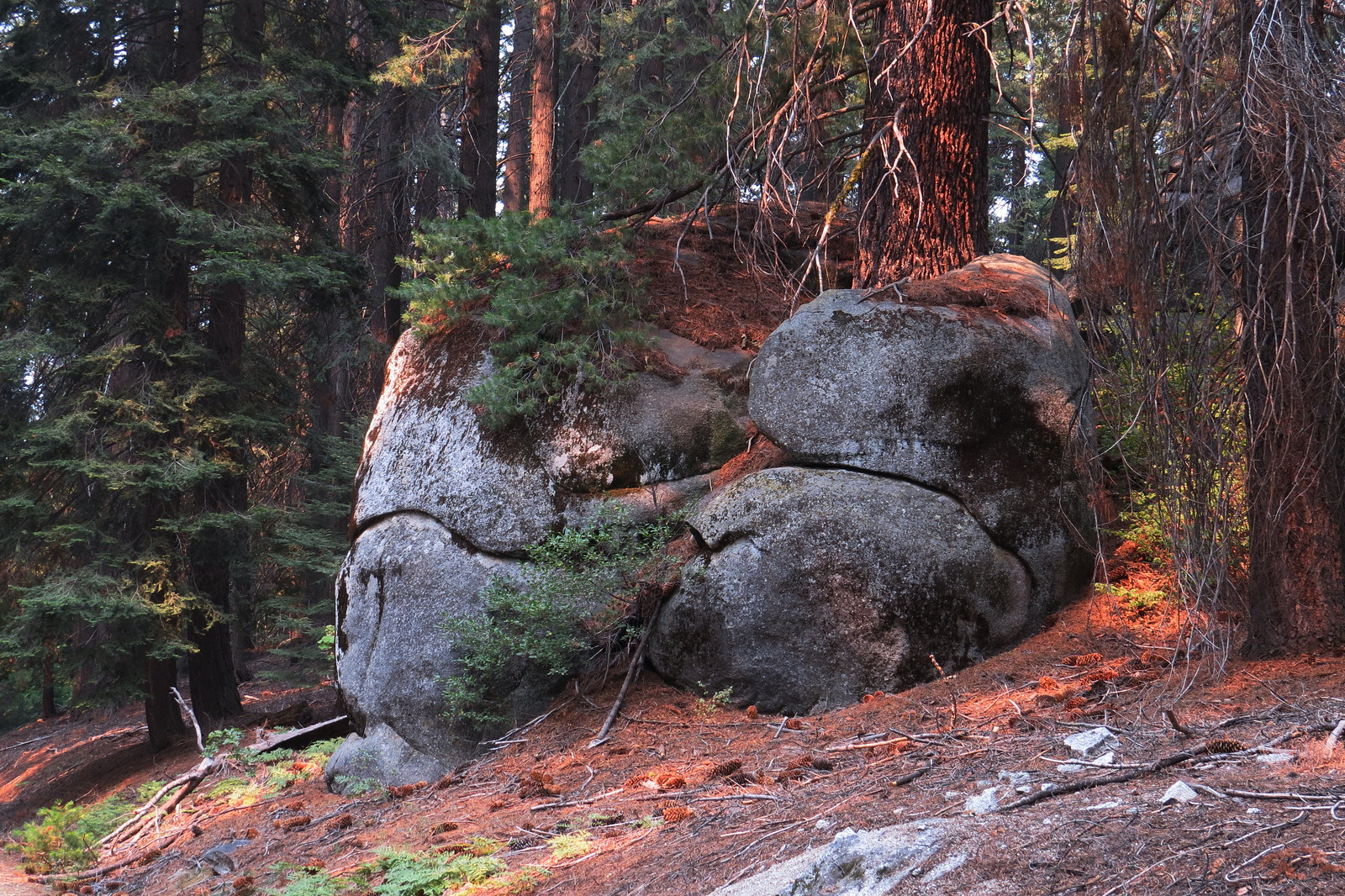 Boots, Kings Canyon, CA