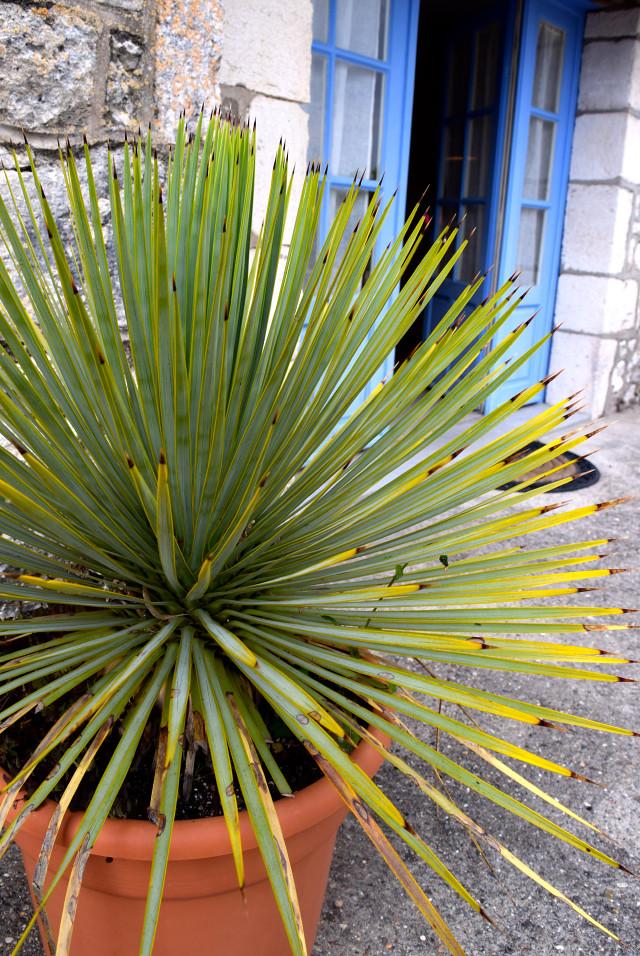 Outside Chateau Panniseau, Bergerac | www.rachelphipps.com @rachelphipps