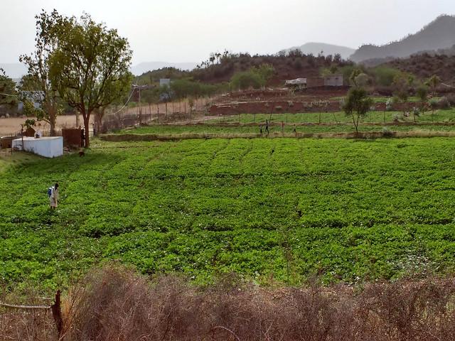 पानी और जंगल बचाने से हरा-भरा घेवर गाँव का कृषि
