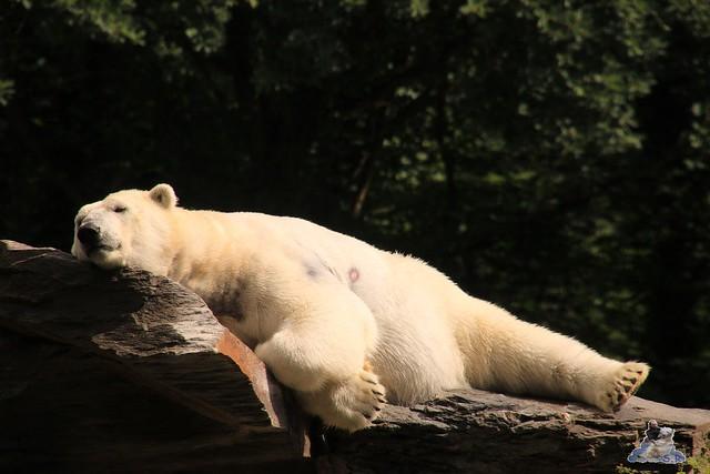 Tierpark Berlin 18.06.2016  021