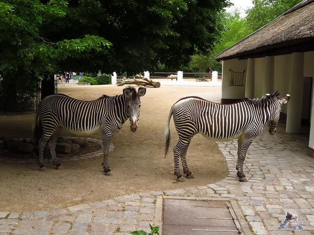 Zoo Berlin 27.05.2016   062