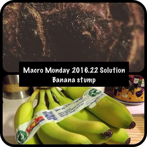 Stumpy potassium #macromonday