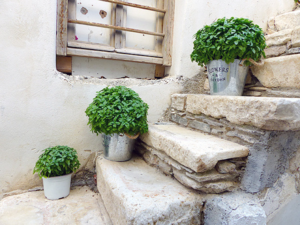 basilic dans les escaliers