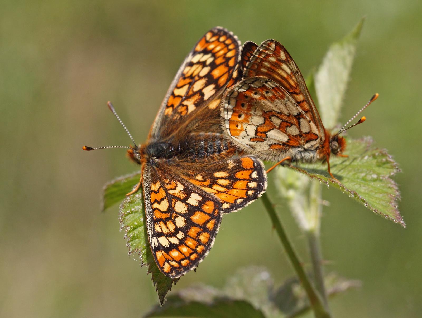 butterfliesandrooks0109