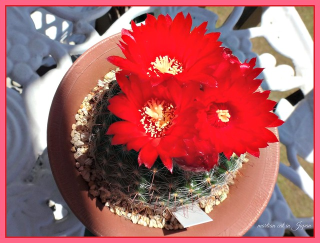 """One of the smaller cactus on my balcony has started to smile, too!"""