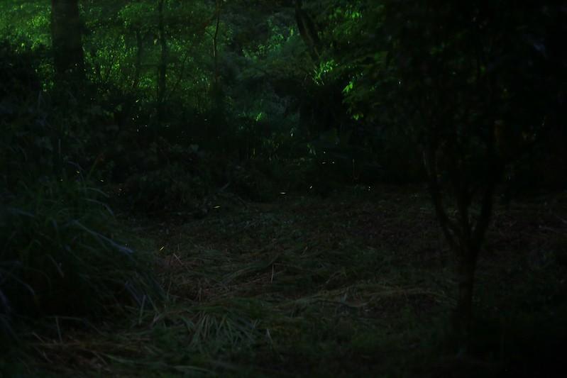 森林裡的綠精靈
