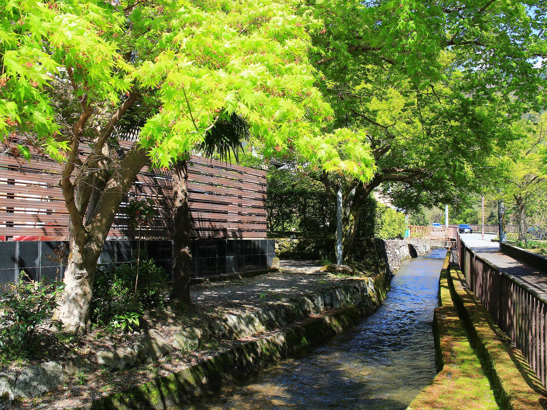 京都 蓮華 寺