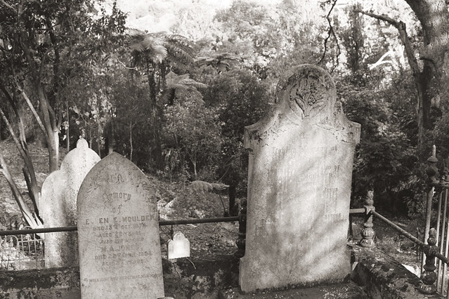 Symonds Street Cemetery, Auckland NZ on 35mm by Dianne Tanner
