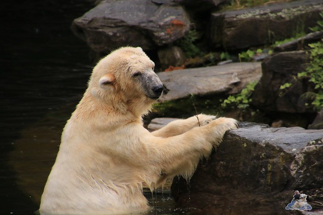 Tierpark Berlin 28.05.2016  0103