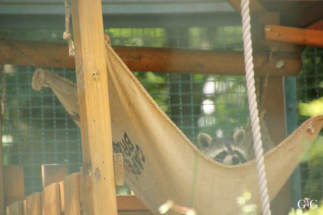 Besuch Tierpark Friedrichsfelde 20.07.201693