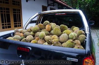 2013-12-02_durian_SK_001_wm_highres