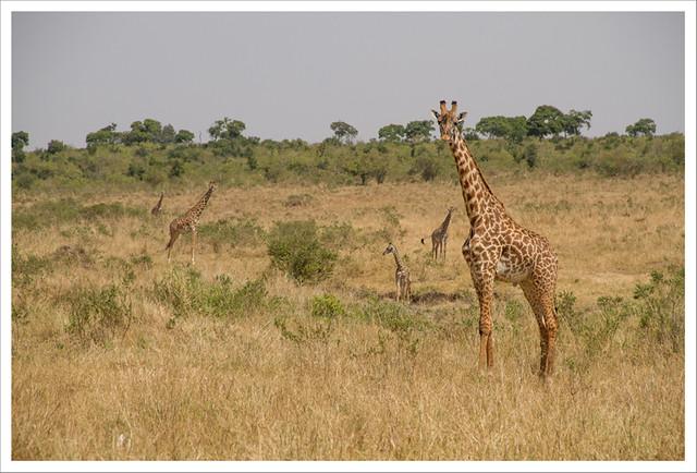 MasaiMara-128