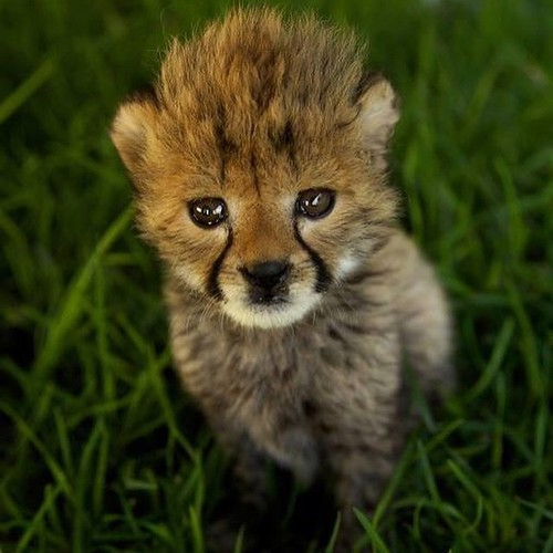 Have you ever seen something so cute? #cute #cutie #cub #