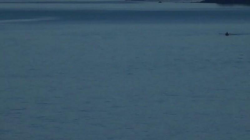 Delfines desde nuestro cuarto