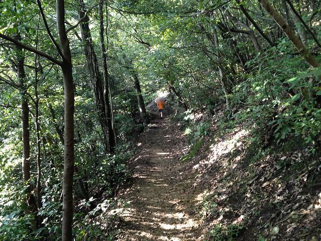 金華山 唐釜ハイキングコース 登山道