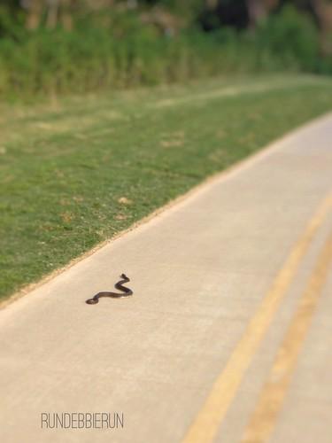 Seen On My Run