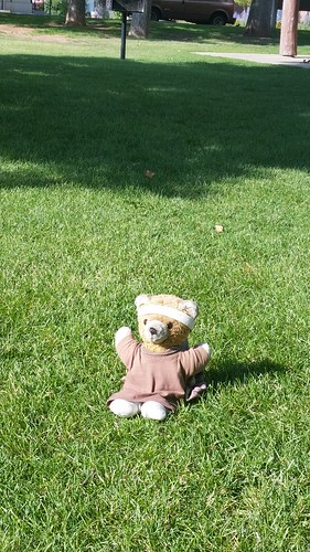 Kuma Bear Picnic in the Park