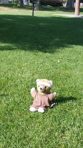 Kuma Bear Picnic in the Park