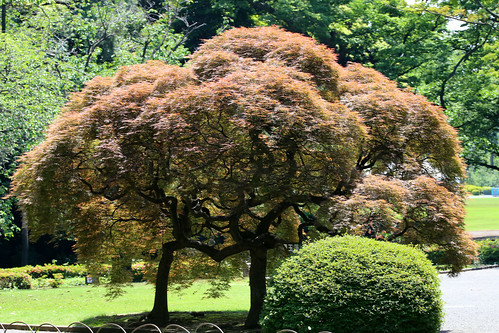 A trip to Shinjuku Gyoen National Garden