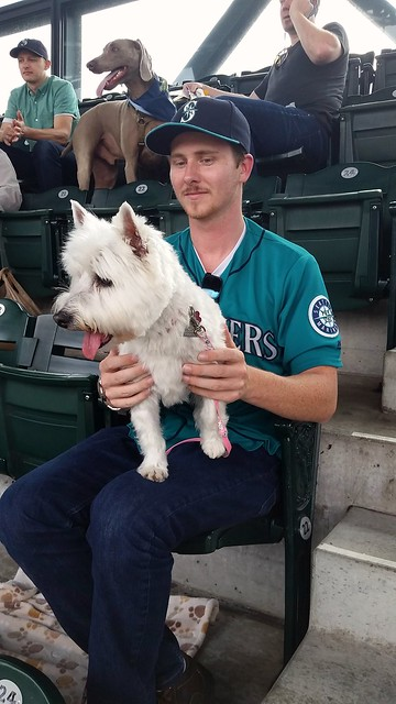 Bark at the Park Daisy Westie Boyfriend