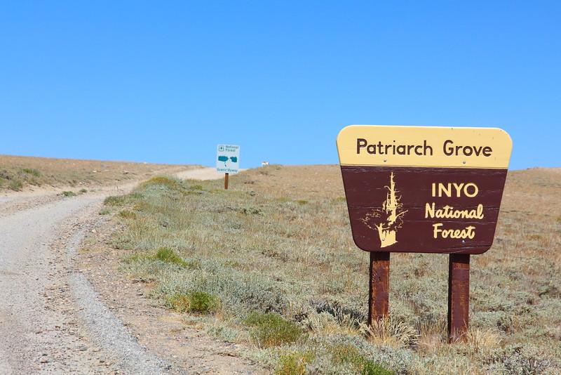 IMG_6272 Patriarch Grove