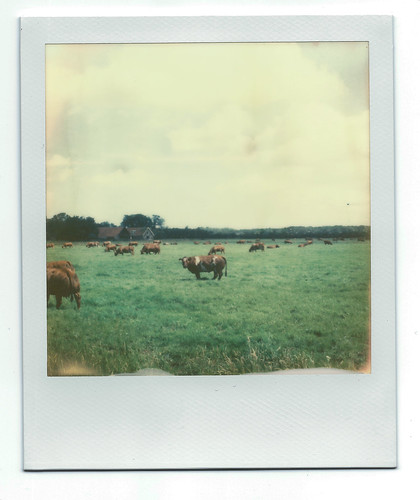 Holy Cow! with PX70 Film | by raysnaps ☂