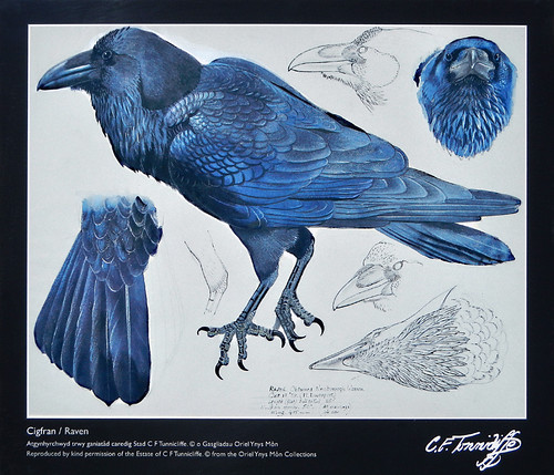 The North Stacks in Anglesey, Wales has an old brick factory that has been converted into an outdoor art gallery containing scenes of life in the area which includes this bird painting of a Raven
