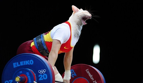 Cat Olympics - Weight Lifting | by nlongtin