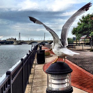 #iphoneography #seagull | by Casey Wertz