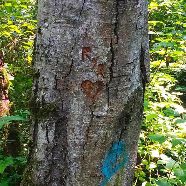 Tree graffiti heart. 💚
