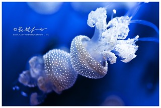 Jellyfish in love | by DoppiaBB Photography 