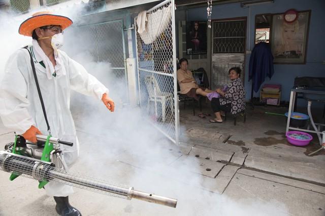 Dengue mosquito control in Bangkok