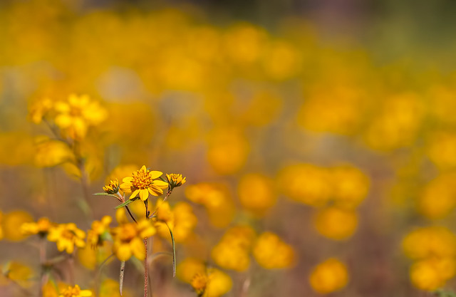 Flower-5-7D1_091616