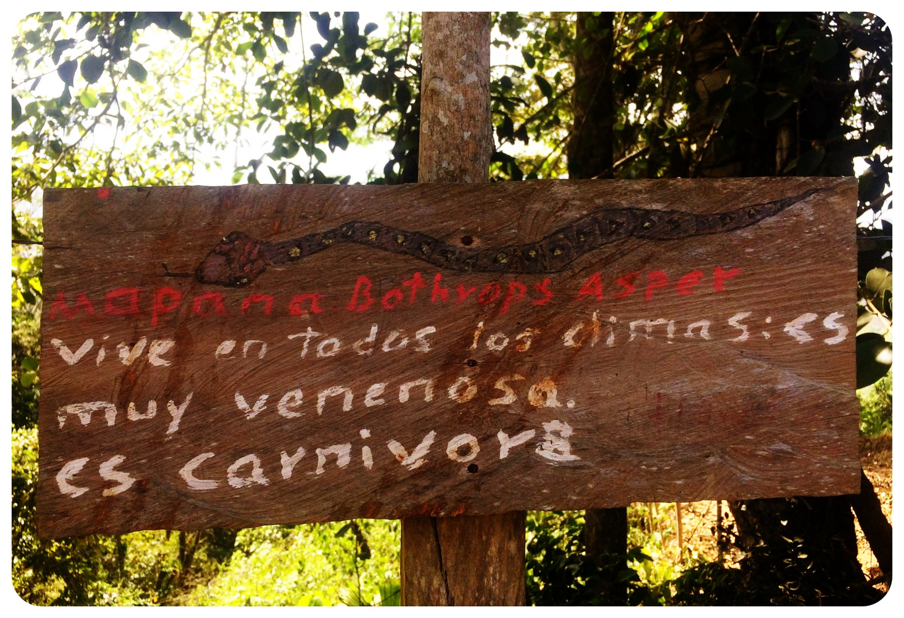 snake dangers colombia