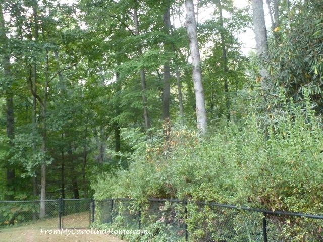 September Forest 4