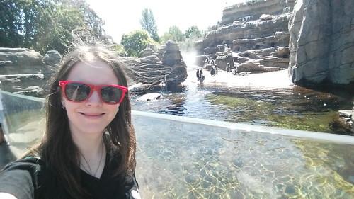 Woodland Park Zoo Penguin Selfie