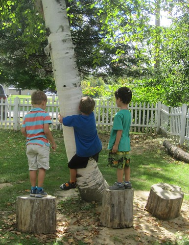 three little monkeys, climbing up a tree