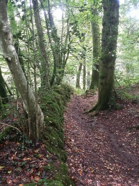 Footpath to Lustleigh Cleave