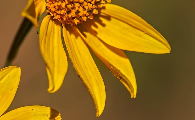 Flower-1-7D1_091616