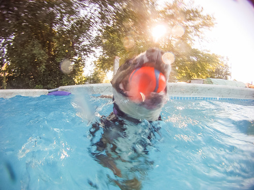 GoPro Pool-8750