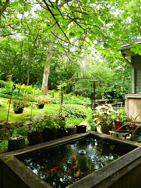 pond to back garden