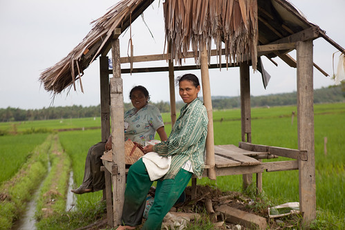 Rice farmers in Aceh, Indonesia. Photo by Mike Lusmore/Duckrabbit, 2012.