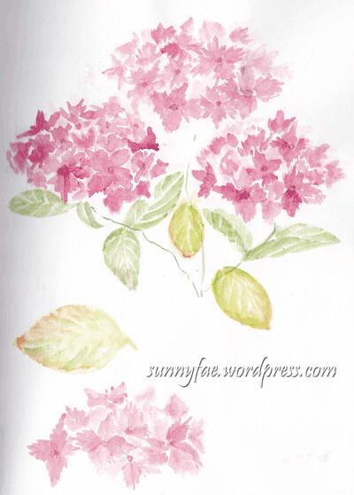 Sketching-hydrangea
