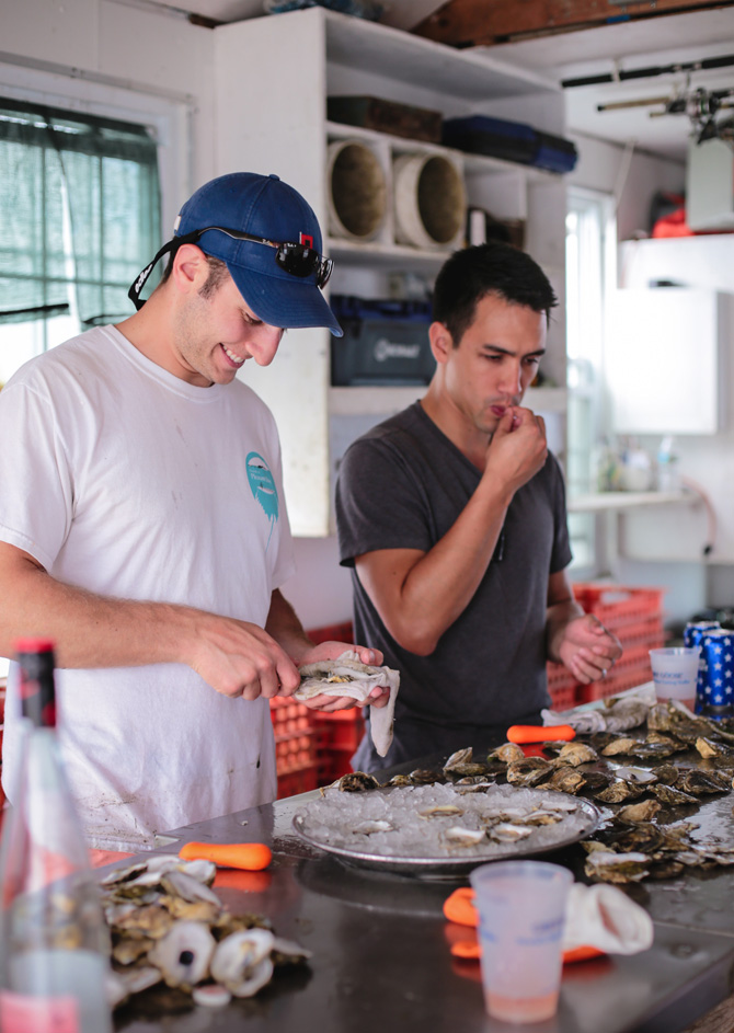 boston island creek oyster farm tour shucking
