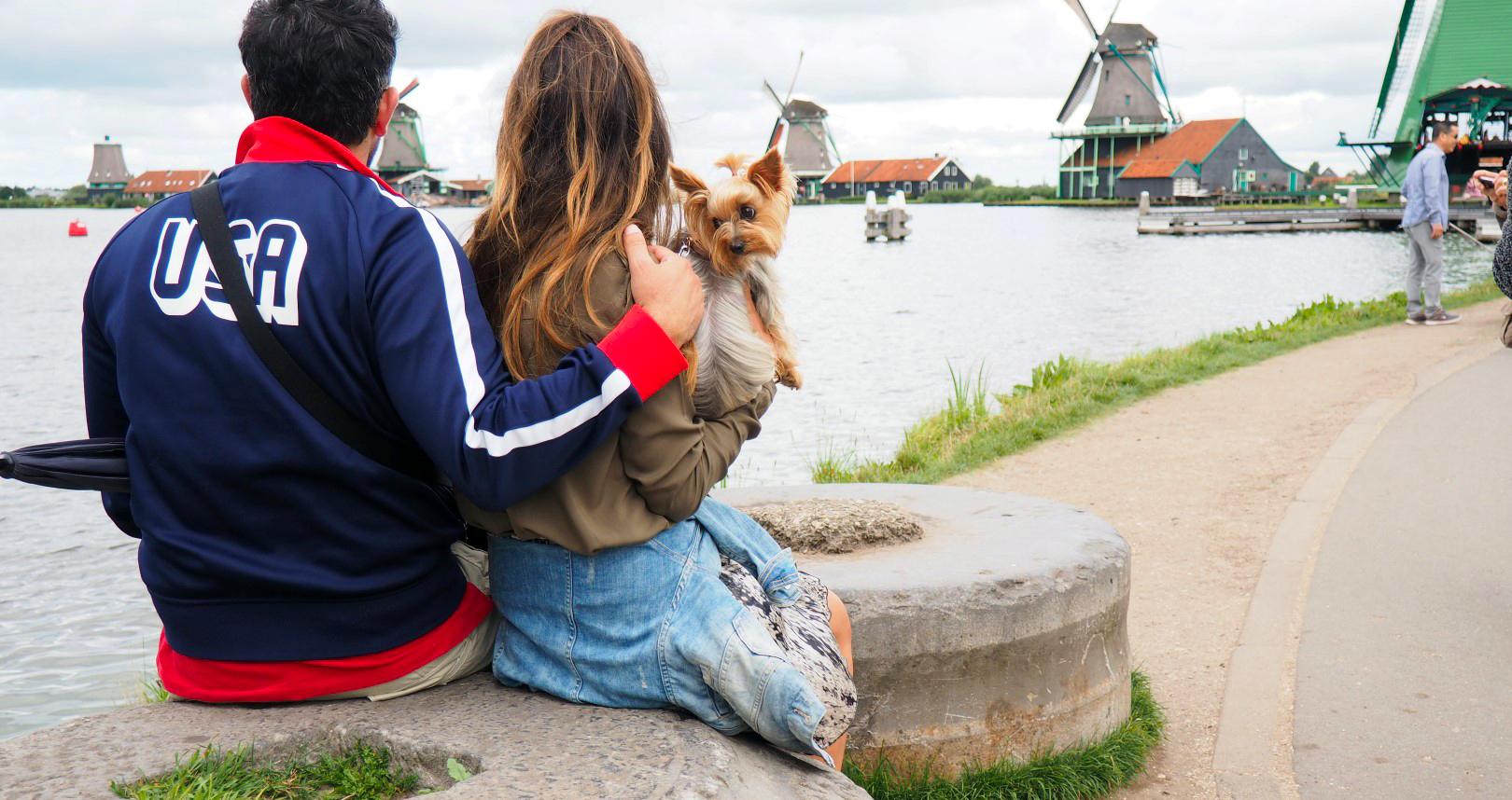 Amsterdam con Perro, Amsterdam con Mascotas amsterdam con perro - 29397505276 63b649d362 o - Visitar Amsterdam con perro
