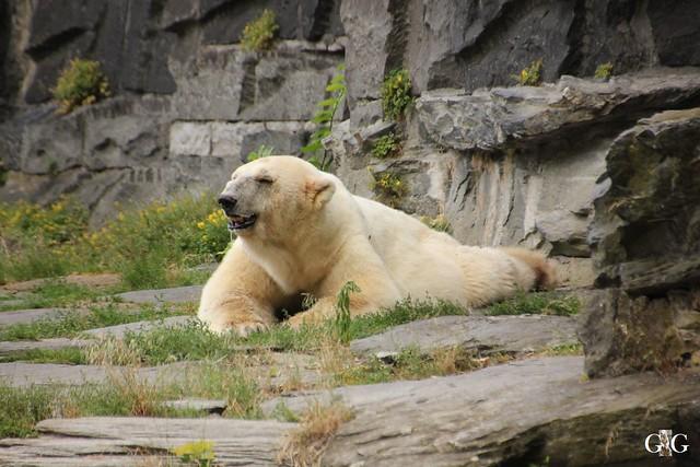 Besuch Tierpark Friedrichsfelde 20.07.20166