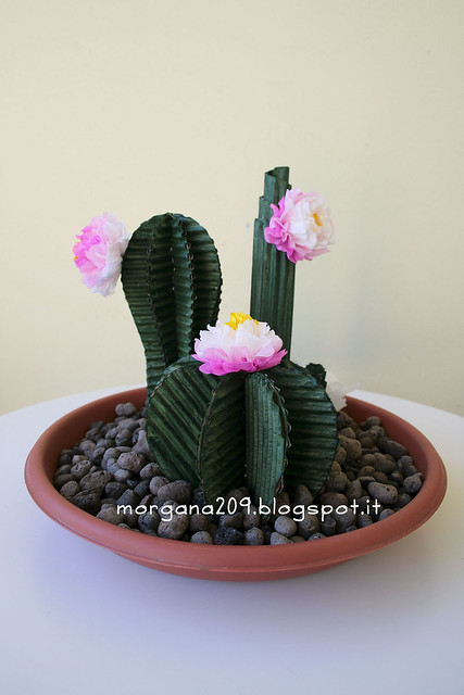 Cactus_02w